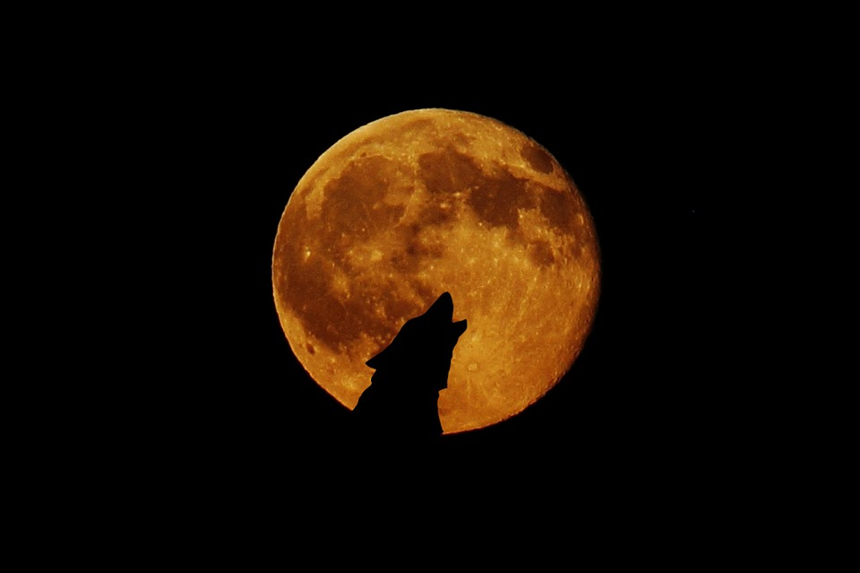 full-moon-948567_960_720